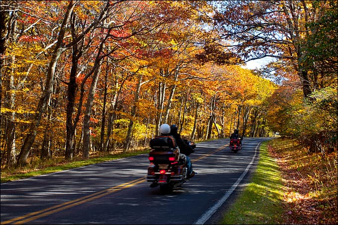 A pair of motorcycle riders cruise down a highway lined with yellow trees.